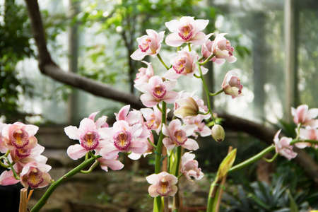 Image of beautiful pink orchids in a botanical garden