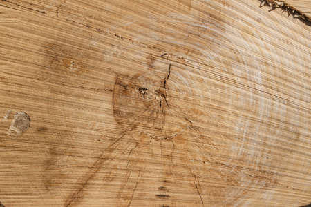 Industry. Cross section of the tree. Wood texture, close-up Reklamní fotografie