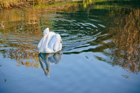 Wildlife. Photo of pelican in the beautiful pond