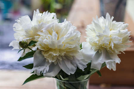 Flowers. Bouquet of white peonies in vase, close-up