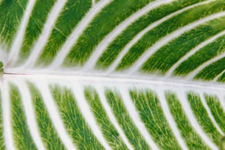 Photo of the leaf looks like paths among the fields