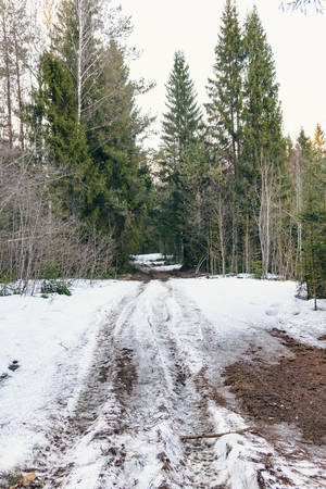 Photo of dirt road in winter forest Stock Photo - 145684811