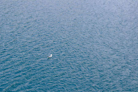 Top view of lonely seagull swims in the windy sea