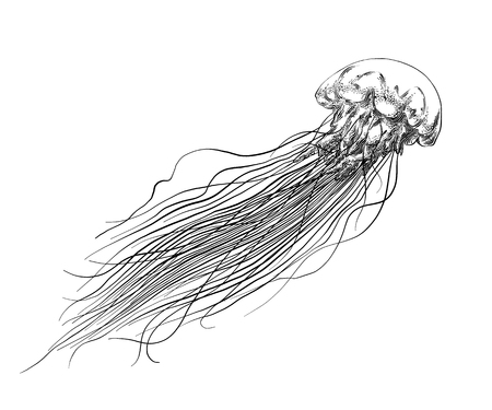 Hand drawn sketch of jellyfish in black isolated on white background. Detailed vintage style drawing. Vector illustration Stock Illustratie