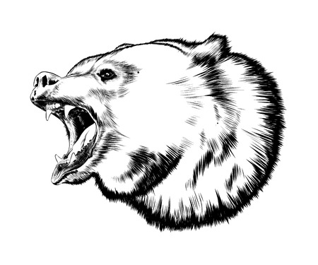 Hand drawn sketch of bear in black isolated on white background. Detailed vintage style drawing. Vector illustration