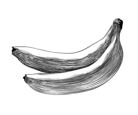 Hand drawn sketch of banana in black isolated on white background. Detailed vintage style drawing. Vector illustration