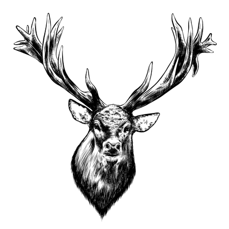 Hand drawn sketch of deer in black isolated on white background. Detailed vintage style drawing. Vector illustration Stock Illustratie
