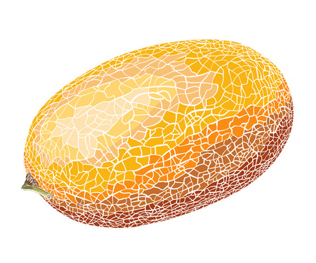 Hand-drawn sketch of melon in color, isolated on white background. Detailed drawing in the style of vintage. Vector illustration.