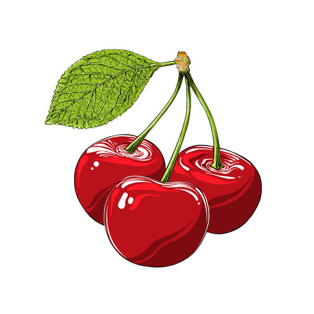 Hand drawn sketch of cherry in color, isolated on white background. Detailed vintage style drawing, for posters, decoration and print. Vector illustration.