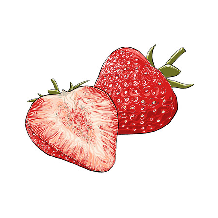 Hand drawn sketch of strawberry in color, isolated on white background. Detailed vintage style drawing, for posters, decoration and print. Vector illustration.