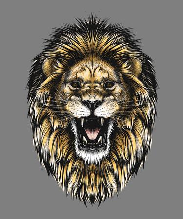 Boceto dibujado mano de cabeza de león en color aislado sobre fondo gris. Dibujo detallado de estilo vintage. Ilustración vectorial para carteles e impresión. Ilustración de vector