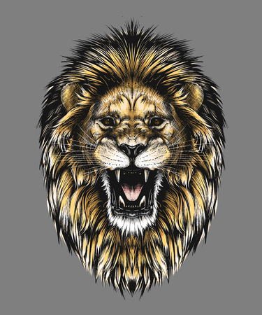 Hand drawn sketch of lion head in color isolated on gray background. Detailed vintage style drawing. Vector illustration for posters and print