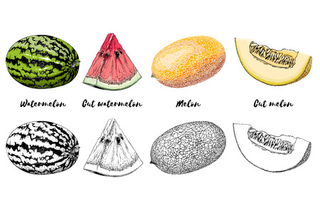 Hand-drawn set of melon and watermelon in color, isolated on white background. Detailed drawing, for posters, decoration and print. Vector illustration.