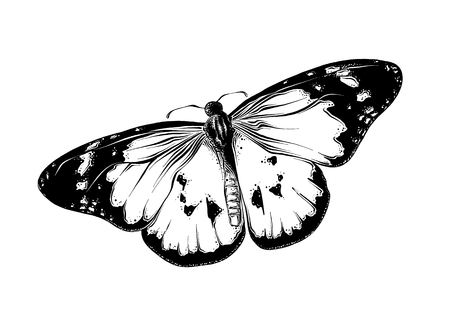 Hand drawn sketch of butterfly in black color. Isolated on white background. Drawing for posters, decoration and print. Vector illustration.