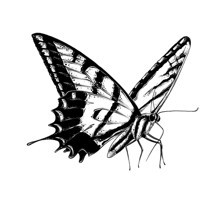 Hand drawn sketch of butterfly in black color, isolated on white background. Drawing for posters, decoration and print. Vector illustration