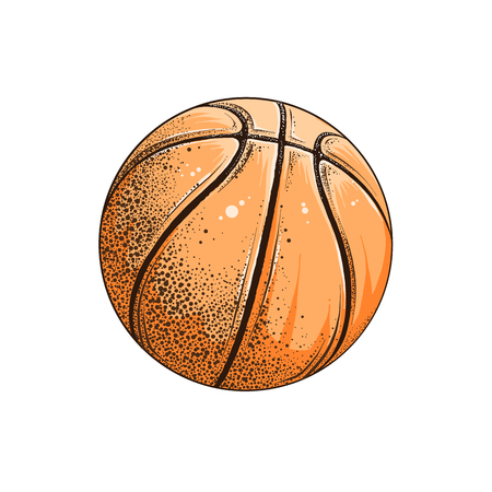 Vector drawing of basketball ball in color, isolated on white background. Graphic illustration, hand drawing. Drawing for posters, decoration and print. Vector illustration
