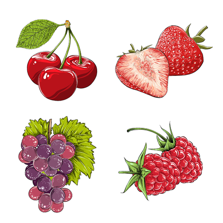 Set of berries in color. Isolated on white background. Hand-drawn elements such as grape, cherry, strawberry and raspberry. Vector illustration Illustration