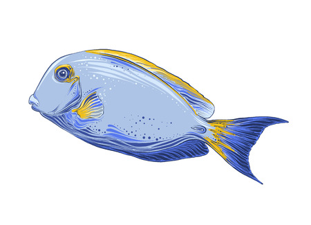 Hand drawn sketch of fish in color. Isolated on white background. Drawing for posters, decoration and print. Vector illustration