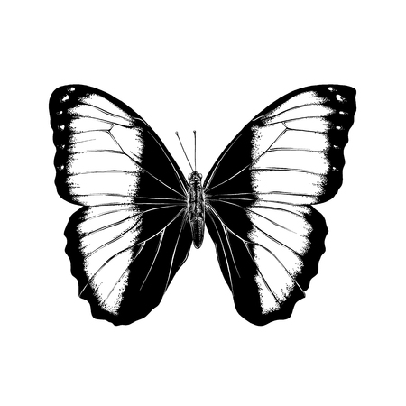 Hand drawn sketch of butterfly in black color. Isolated on white background. Drawing for posters, decoration and print. Vector illustration