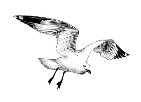 Schizzo disegnato a mano del gabbiano in colore nero. Isolato su sfondo bianco. Disegno per poster, decorazione e stampa. Illustrazione vettoriale