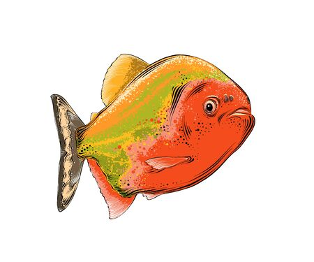 Vector drawing of fish in color, isolated on white background. Graphic illustration, hand drawing. Drawing for posters, decoration and print. Vector illustration Illustration