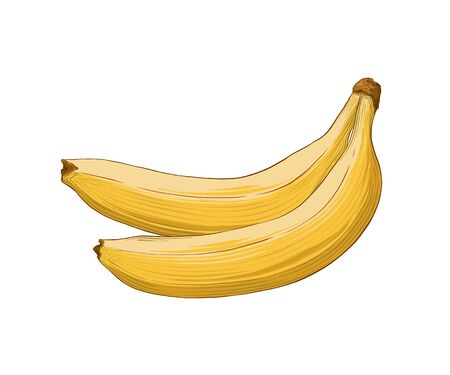Hand drawn sketch of banana in color isolated on white background. Detailed vintage style drawing. Vector illustration