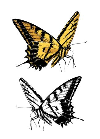 Hand drawn sketch of butterfly in color. Isolated on white background. Drawing for posters, decoration and print. Vector illustration