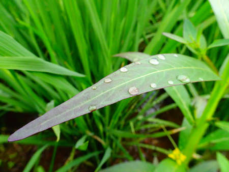 dewdrop on the leaf with a light sparkle