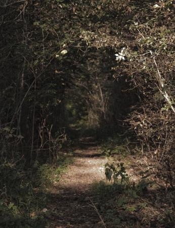 Afbeelding van een betoverde bos in Beieren Stockfoto