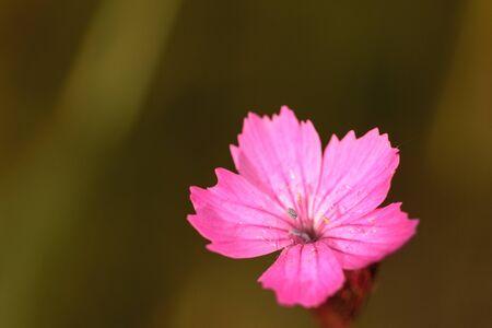 violett: Violett flower in June