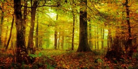 Magical Forest beeld van een gouden oktober betoverde