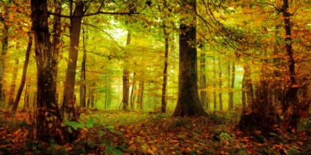 Magical enchanted Forest image of a golden October