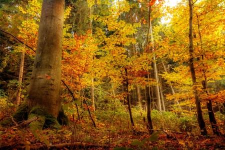 Golden oktober Bos Stockfoto