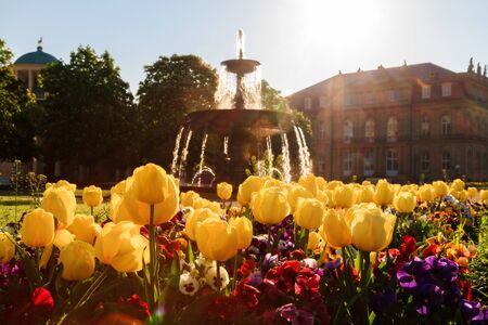 Lovely Picture of Flowers in front of a fountain on a warm morning in the Stuttgart Palace Park, Germany