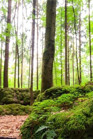 druid: Sacred Druid Grove in Germany Stock Photo