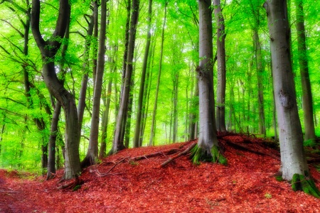 late summer: Bavarian Late Summer Forest Picture Stock Photo