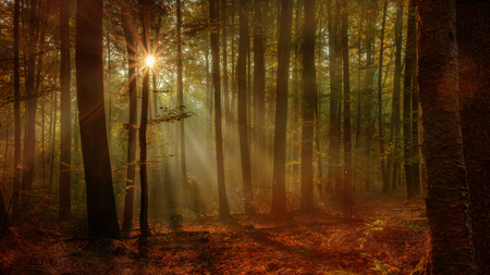 Enchanted Autumn Forest with the lovely rising morning sun  Leaves on the ground and light fog in the air  Warm rays of the sun shine through the deciduous woods of Upper Franconia   Bavaria, Germany  photo