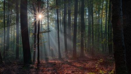 Verrukt Bos van de herfst met de mooie opkomende ochtendzon Bladeren op de grond en de lichte mist in de lucht warme stralen van de zon schijnen door de loofbossen van Opper-Franken Beieren, Duitsland