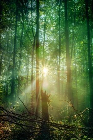 Enchanted Bos van de herfst met de mooie rijzende ochtendzon Bladeren op de grond en lichte mist in de lucht warme stralen van de zon door de loofbossen van Opper-Franken Beieren, Duitsland Stockfoto