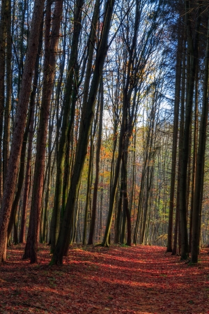 Amazing Fall Forrest  Lovely Nature Picture of an European Forest in Bavaria, Germany photo