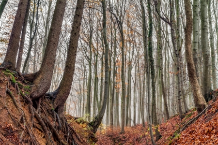 Amazing Fall Forrest  Lovely Nature Picture of an European Forest in Autumn Bavaria, Germany  Spooky and Creepy Atmosphere  photo