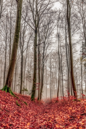 nature picture: Amazing Fall Forrest  Lovely Nature Picture of an European Forest in Autumn Bavaria, Germany  Spooky and Creepy Atmosphere  Stock Photo