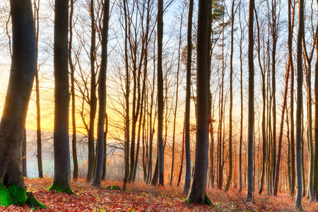 Winter Forrest  Red leaves on the ground, barren trees, sunset through the woods photo
