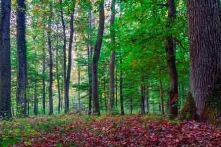 Autumn Forrest Reklamní fotografie