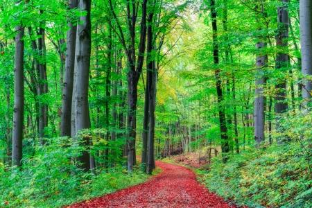 Herfst Forrest Stockfoto