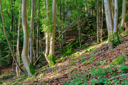 trecking: Picturesque Bavarian Summer Forrest. Shot in the Woods of Upper Franconia, Germany. Green Foliage on a trecking trail through rocky terrain Stock Photo