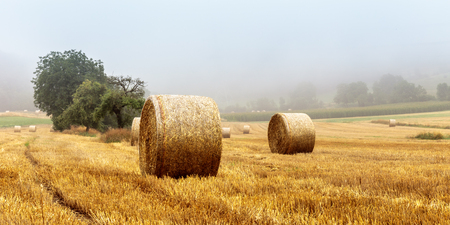 agruculture: Hay Bales on a foggy morning in rural bavaria, Germany Stock Photo