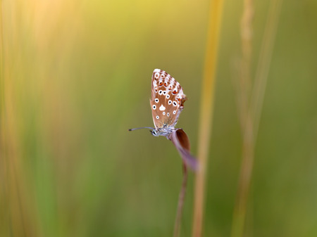 gossamer: Blue Gossamer winged Butterfly in the morning with blurred background Stock Photo