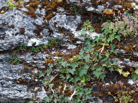 intended: Plants on Rocks. Intended Blurredness Stock Photo