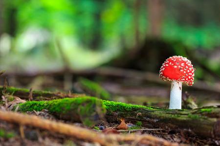 wilde bos paddestoelen in de bossen van Beieren in Duitsland in de herfst. Beeld van de schimmels met mooie bokeh werd genomen op een warme dag met september.